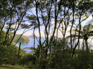 Urwald in Neuseeland © Eva Bergschneider